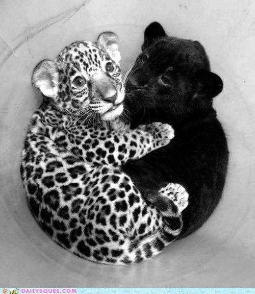 Cuddly Cubs... Squeeeeeee!