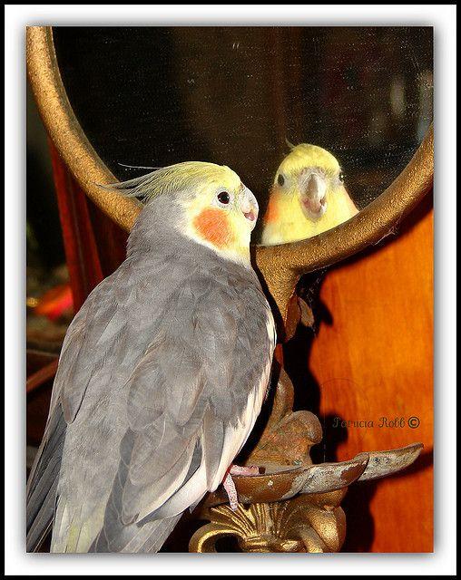 pretty bird, pretty bird
