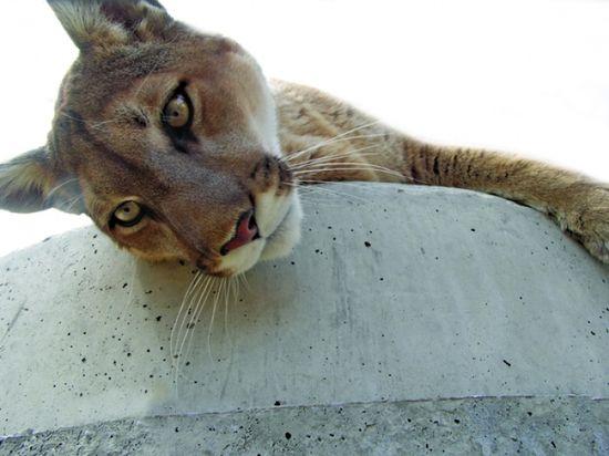 the Wild Animal Sanctuary in Keenesburg, CO