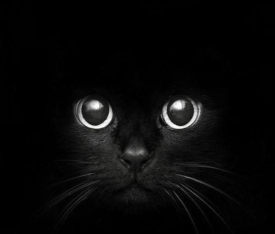 Boo! #catober