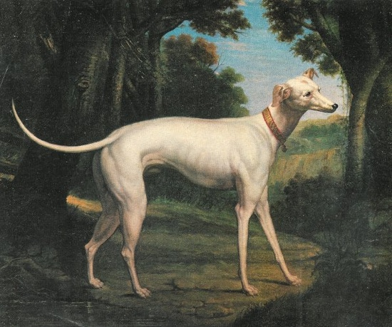 A thoroughbred Italian Greyhound by Alfred de Dreux.