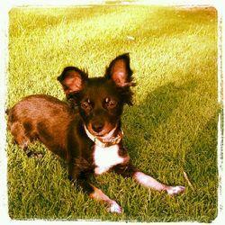 Petfinder Adoptable Dog