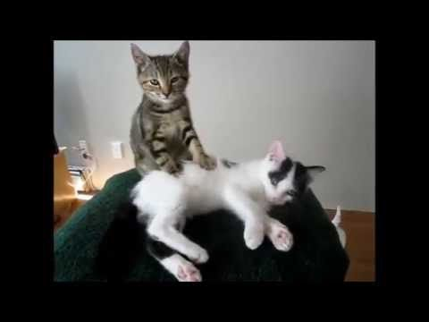 Best funny animal video clips