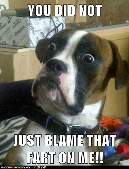 "YOU DID NOT  JUST BLAME THAT FART ON ME!!   ""Baffled Boxer"" Meme"