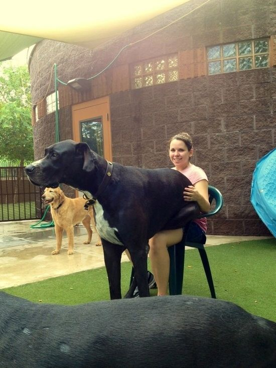 21 dogs that don't realize how big they are.
