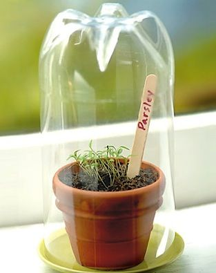 Starting Seeds… with a 2-liter bottle! (diy greenhouse)    What you'll need        Clear 2-liter soda bottle      Small flowerpot      Potting soil      Seeds      Saucer      Craft stick marker    Helpful Tip: Consider planting herbs, such as parsley and basil, that can be transplanted outside once the weather warms