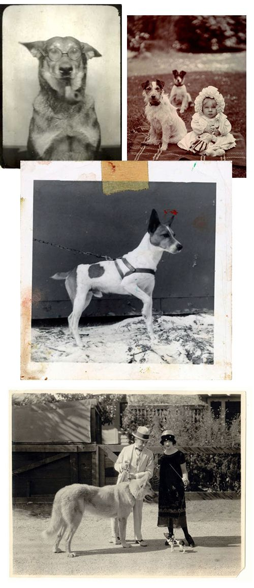 A Dog's Life: Collecting Vintage Dog Photography - Dog Milk