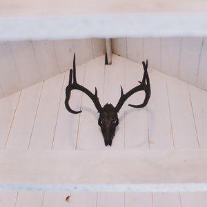 painting antlers black