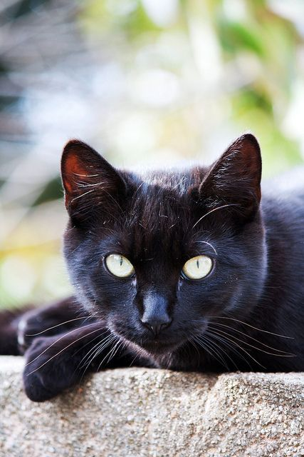 Love those black cats