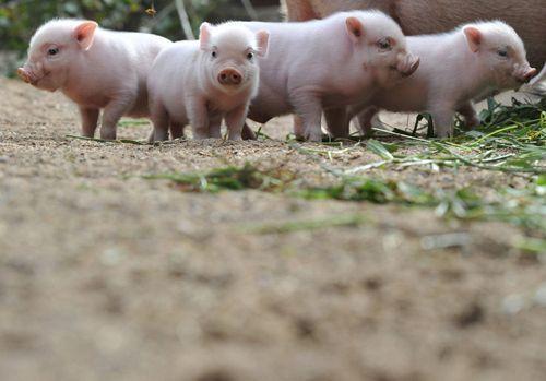 baby animals #cute baby Animals #Baby Animals
