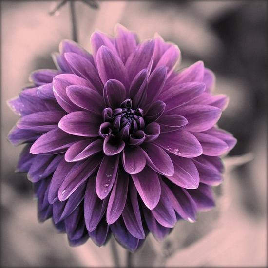 Flower #Home