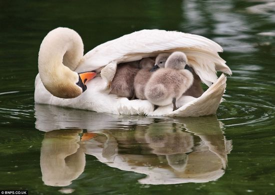 mother and baby...so cute...