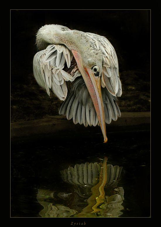 Jose Gallego's animals photography