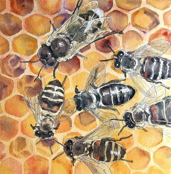 Honey Bee Watercolor Painting by Linda Knoll