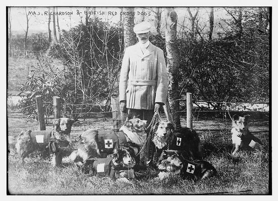 The history of service dogs dates back in time. Here is a photo circa WW1 of Maj. Richardson & British Red Cross dogs  (LOC) Bian News Service Publisher, by The Library of Congress, via Flickr