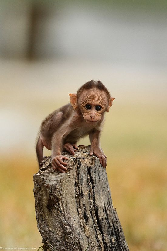 This monkey is so ugly it's cute!