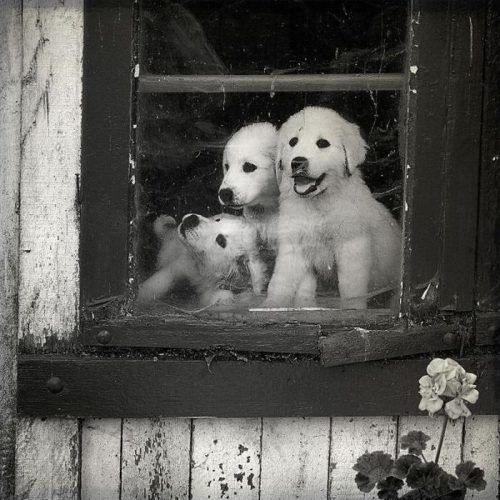 puppies!#pet girl