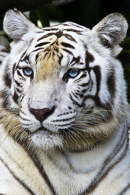 Beautiful crystal blue eyes