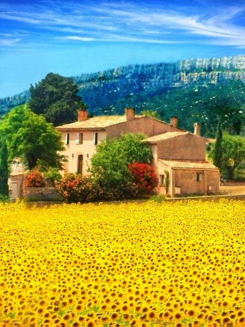 Sunflower field...St.Maxime France. ~ Blogger Pixz