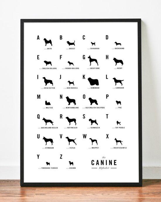 Dog Alphabet Nursery poster art print illustration typography. $19.00, via Etsy.