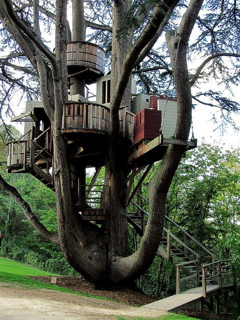 Tree house/ love the shape of this tree.