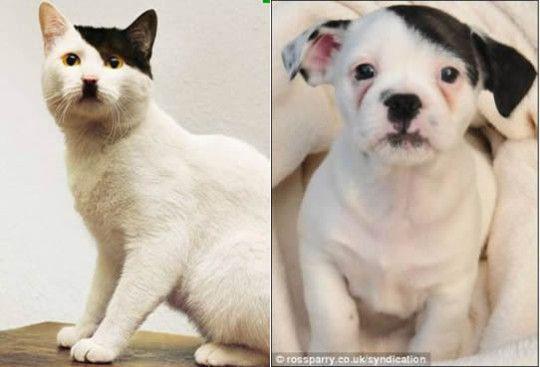 Two cute pets look like Hitler.