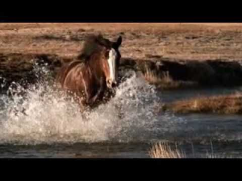 """Budweiser Commercial """"Clydesdale Circus"""" (HD)"""