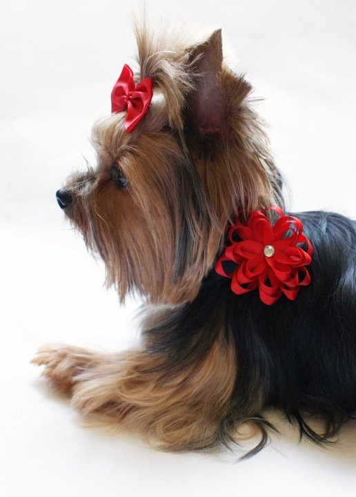 Elegant All Red Bling Layered Pet Collar Slider Bow