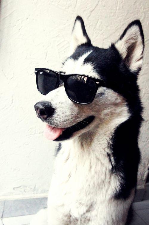 Cool dog