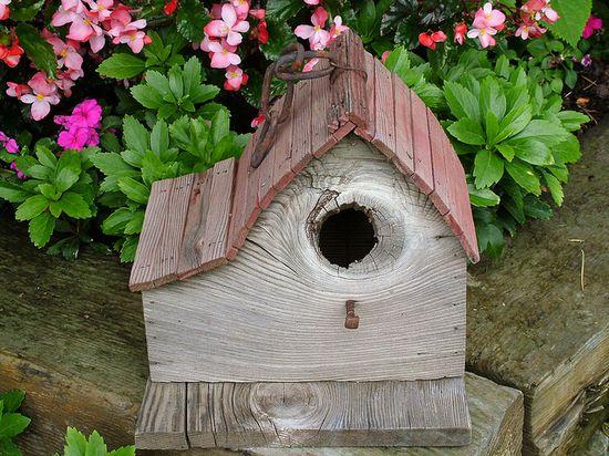 knot hole bird house