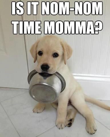 Just like my dog