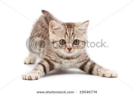 stock photo : Funny kitten