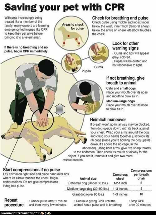 Be prepared...dogs and cats can be saved with CPR too!