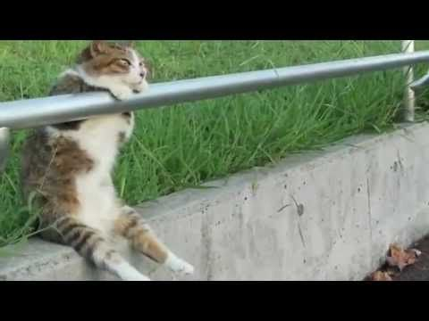 Best Funny Animal Videos Compilation 2013 - videos.airgin.org...