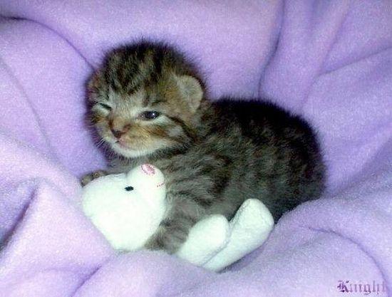 And now I lay me down to sleep...??????