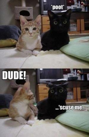#funny cats #funny {hahahaha awh}