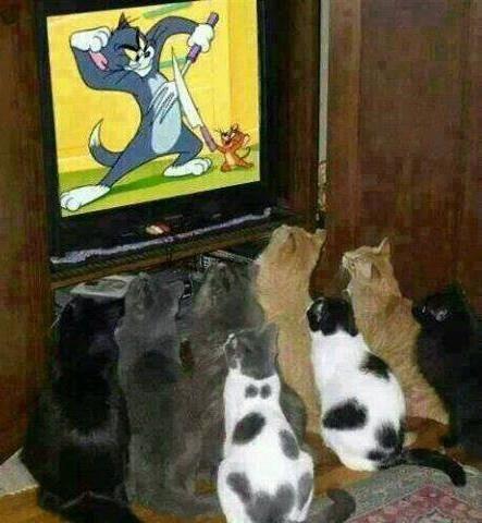 #humor #funny #kitty #cats #funny