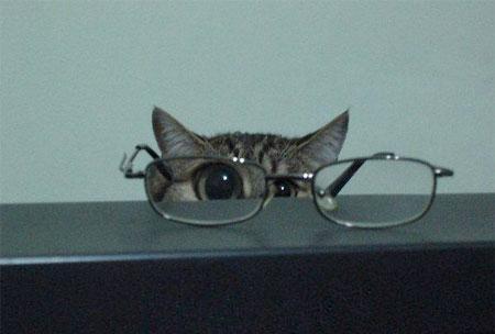 cat!:))