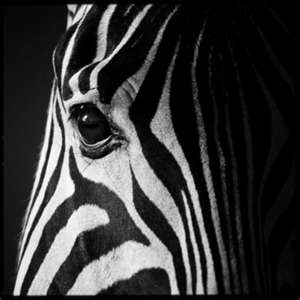 It's amazing to see black and white animals in such versatile designs.