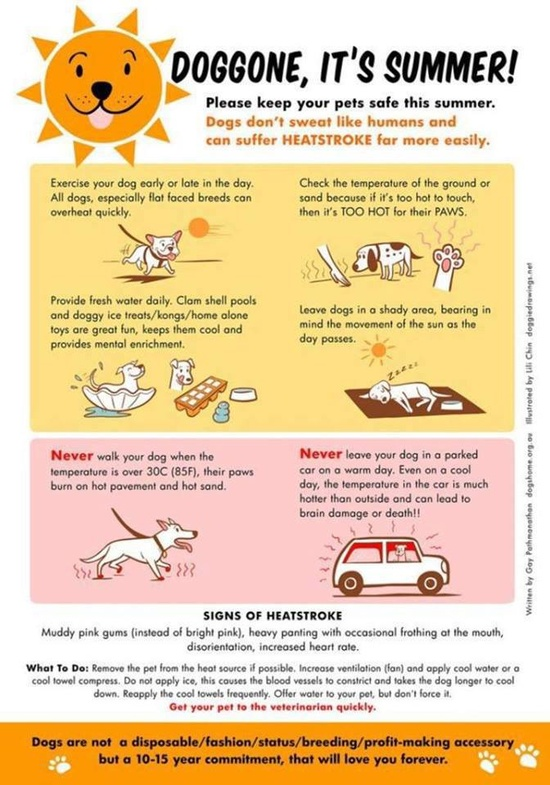 Some very important tips for your dog this summer :)