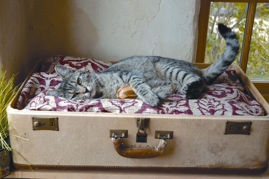 Make a pet bed out of an old suitcase.