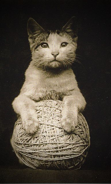A Cat with a Ball of Twine. Vintage Photo.