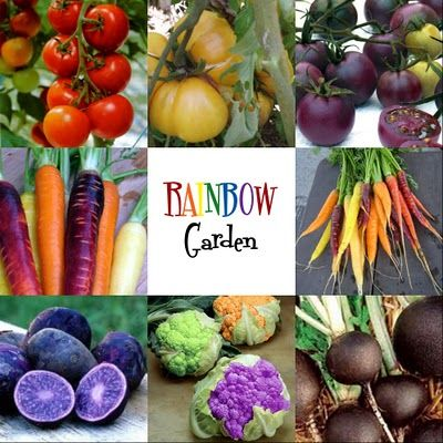 Rainbow Kid Garden by notjustahousewife...: Red, yellow, and purple tomatoes, rainbow mix carrots, black radishes, blue potatoes, and colored cauliflower. What a fun idea! #Kids #Garden #Rainbow_Kid_Garden #notjustahousewife