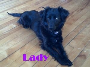 Lady is an adoptable Dachshund Dog in Minneapolis, MN. Name: Lady Breed: Long Hair Dachshund/Spaniel x Age: Young adult, 1-2 yr Weight: ~14lb Adoption Fee: $350 Poor Lady was found living outside for ...