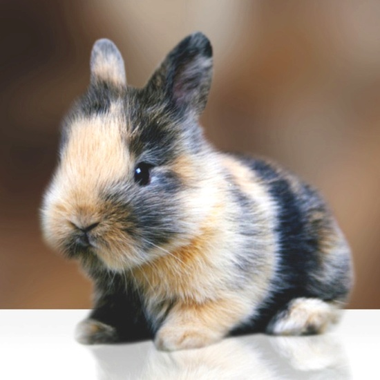 Baby animals I want(: