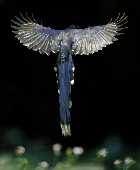 Beautiful bird in flight. By John & Fish