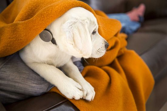 The Whistle Activity Monitor is an on-collar device that measures your dog's activities including walks, play, and rest, letting you keep tabs on day-to-day behavior and long-term health trends.