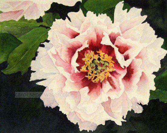 peony watercolor painting - carol sapp