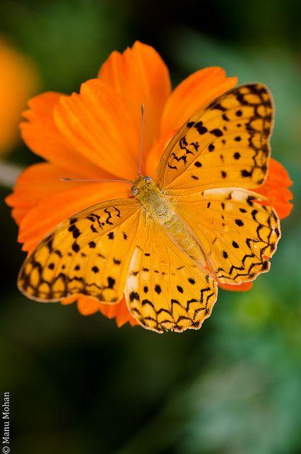 Butterfly flower!  ? ?