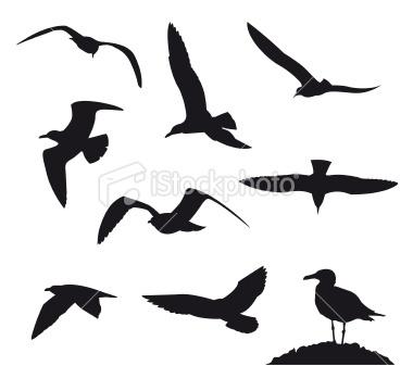 bird tattoo inspiration - like the top right bird!
